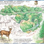 Foresta Tarvisio bd